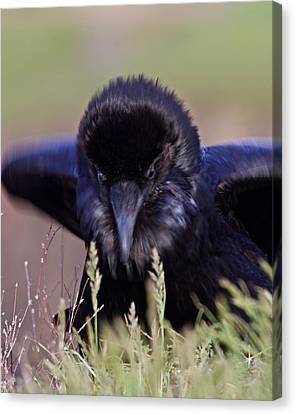 Canvas Print featuring the photograph Nevermore by Todd Kreuter