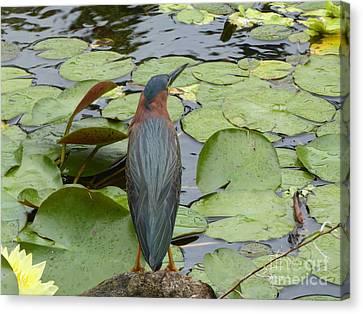 Nevis Bird Observes Canvas Print