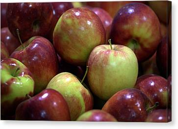 New Apples Canvas Print by Joseph Skompski