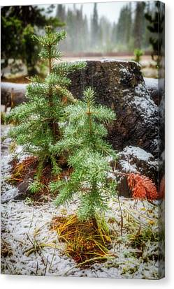 Canvas Print featuring the photograph New Beginnings by Cat Connor