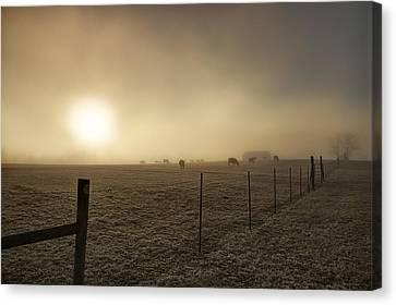 New Day Through The Fog Canvas Print by Mike Eingle