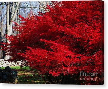 Fall Glory In New England  Canvas Print