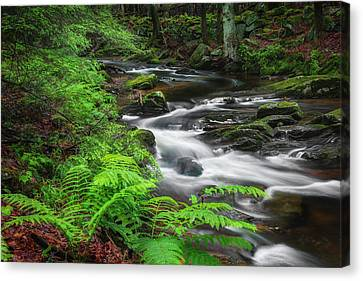 New England Spring Stream Canvas Print by Bill Wakeley