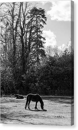 New Forest Silhouette Canvas Print by Hazy Apple