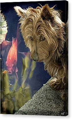 New Friends Canvas Print by Chris Lord