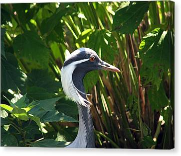New Hairdo Canvas Print by Kevin  Sherf