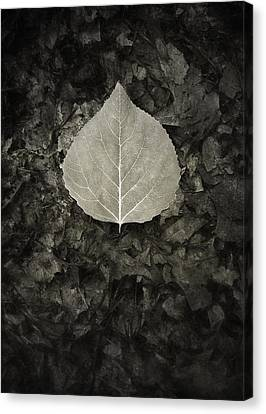 New Leaf On The Old Canvas Print