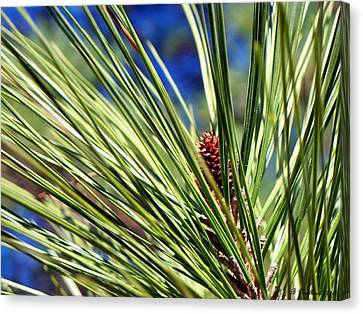 Canvas Print featuring the photograph New Life by Betty Northcutt