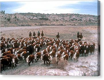 New Mexico Cattle Drive Canvas Print by Jerry McElroy