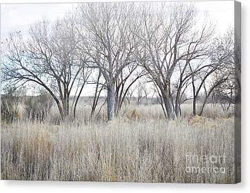 Canvas Print featuring the photograph New Mexico Desert Tree Field by Andrea Hazel Ihlefeld