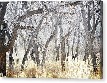 New Mexico Dreamy Jemez Woodland Canvas Print by Andrea Hazel Ihlefeld