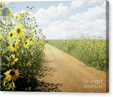 Canvas Print featuring the photograph New Mexico Sunflower Road by Andrea Hazel Ihlefeld