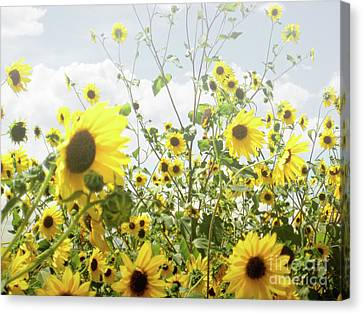 Canvas Print featuring the photograph New Mexico Sunflowers by Andrea Hazel Ihlefeld