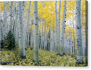 Canvas Print featuring the photograph New Morning by The Forests Edge Photography - Diane Sandoval