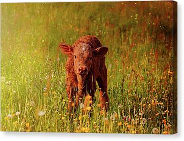 New To The World Canvas Print