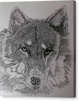 Wolf. Canvas Print by Cynthia Adams