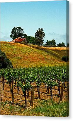 New Vineyard Canvas Print by Gary Brandes