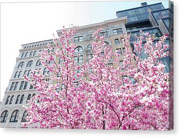 New York In The Springtime Canvas Print by Vivienne Gucwa