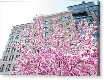New York In The Springtime Canvas Print