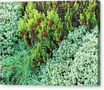 Canvas Print featuring the photograph New Zealand Flora by Michele Penner