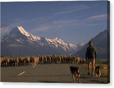 New Zealand Mt Cook Canvas Print