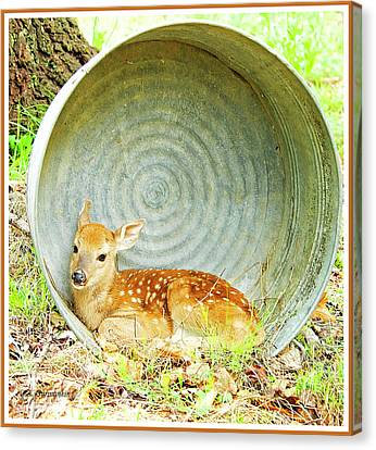 Newborn Fawn Finds Shelter In An Old Washtub Canvas Print by A Gurmankin