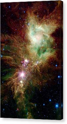 Newborn Stars Canvas Print by American School