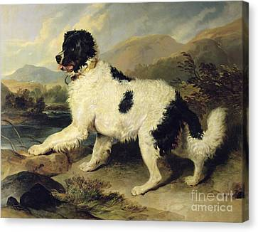 Newfoundland Dog Called Lion Canvas Print by Sir Edwin Landseer