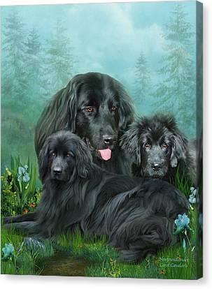 Newfoundlander Canvas Print - Newfoundlander by Carol Cavalaris