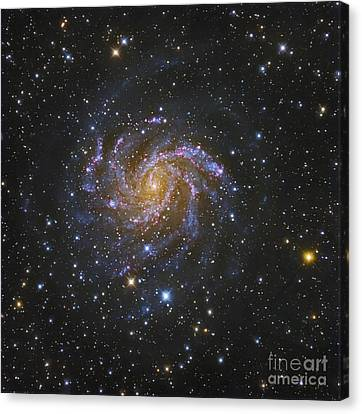 Ngc 6946, Also Known As The Fireworks Canvas Print by Robert Gendler