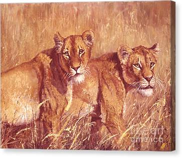 Ngorongoro Lionesses Canvas Print by Silvia  Duran