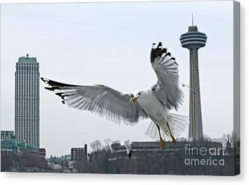 Niagara Falls With Gulls Canvas Print by Charline Xia