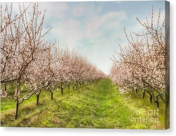 Niagara's Spring Canvas Print
