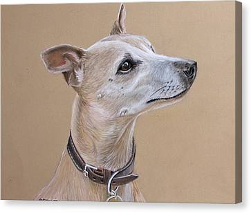 Niamh The Whippet Canvas Print