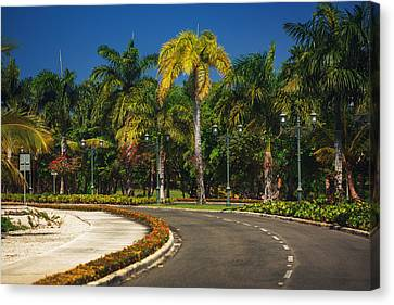 Nice Asfalt Road With Palm Trees Against The Blue Sky Canvas Print by Valentin Valkov