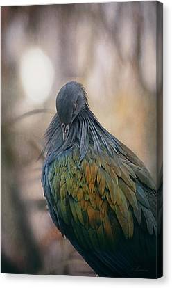 Nicobar Pigeon - Exotic Beauty Canvas Print by Maria Angelica Maira