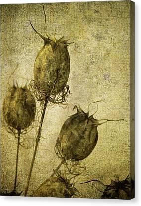 Canvas Print featuring the digital art Nigella Pods by Margaret Hormann Bfa