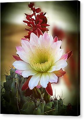 Canvas Print featuring the photograph Night-blooming Cereus 2 by Marilyn Smith