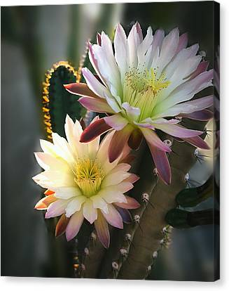 Canvas Print featuring the photograph Night-blooming Cereus 3 by Marilyn Smith