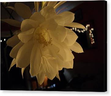 Night Blooming Cereus 1 Canvas Print by Claire Long