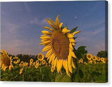 Night Field Canvas Print by Kristopher Schoenleber