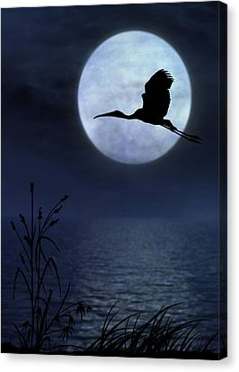 Night Flight Canvas Print by Christina Lihani