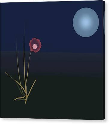 Night Flower Canvas Print by Denny Casto