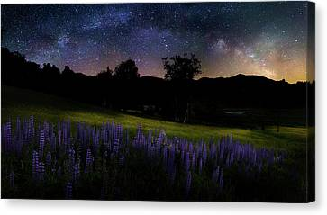 Night Flowers Canvas Print by Bill Wakeley