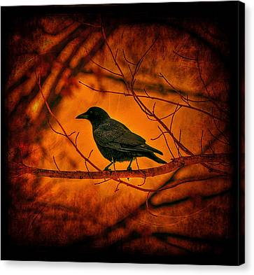 Night Guard Canvas Print by Evelina Kremsdorf