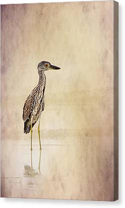 Night Heron 3 By Darrell Hutto Canvas Print by J Darrell Hutto