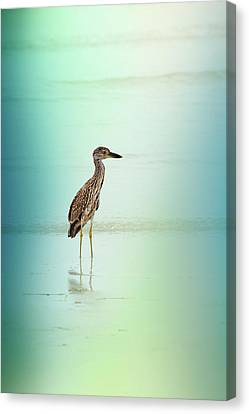 Night Heron By Darrell Hutto Canvas Print by J Darrell Hutto