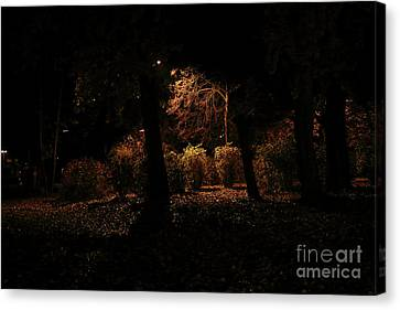 Night In The Park  Canvas Print