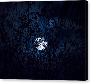 Night In The Witch's Forest Canvas Print by Mark Andrew Thomas