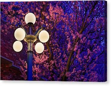 Night Of The Cherry Blossoms Canvas Print by Keith Boone